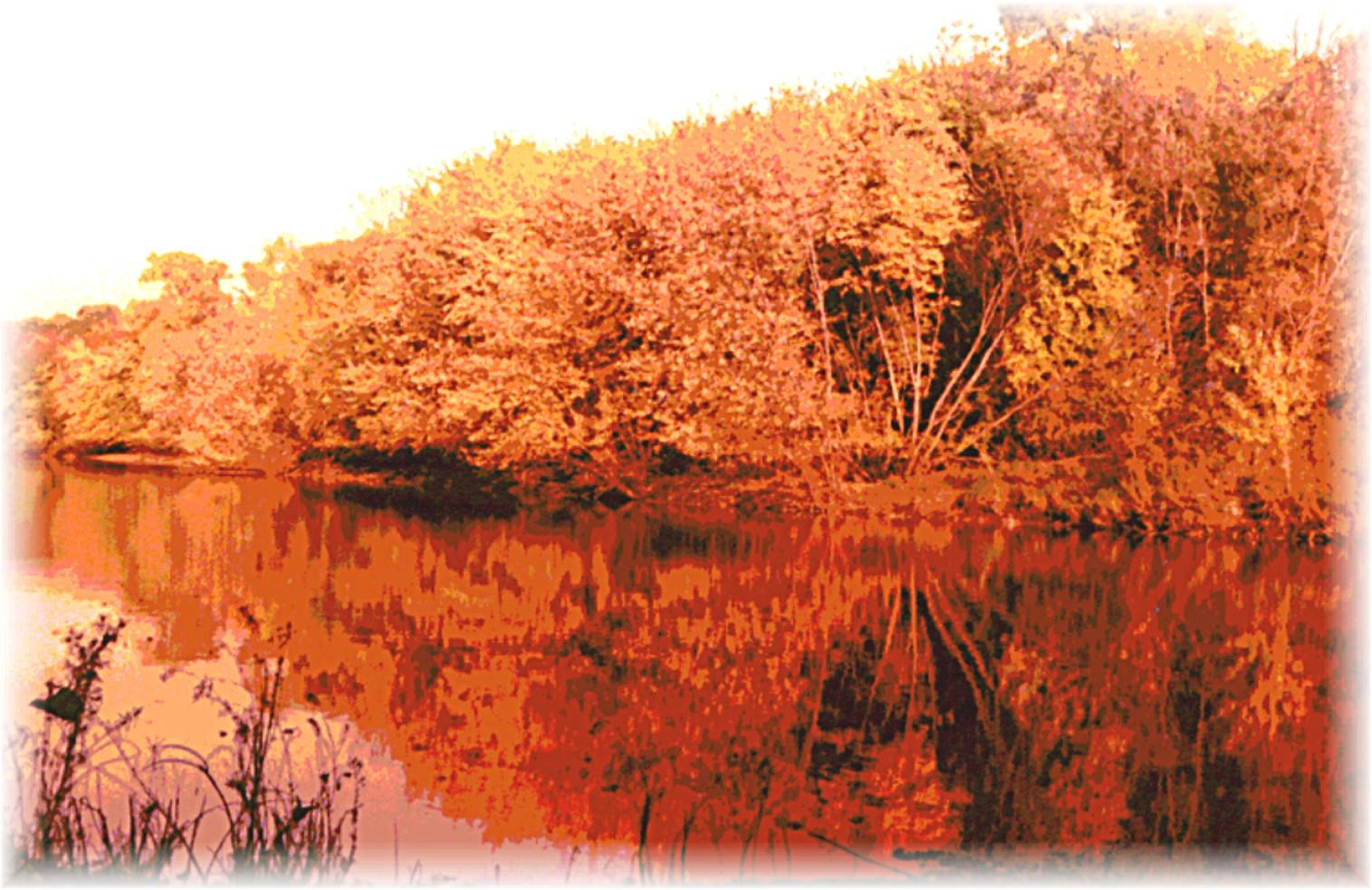 fallgoldtrees.jpg