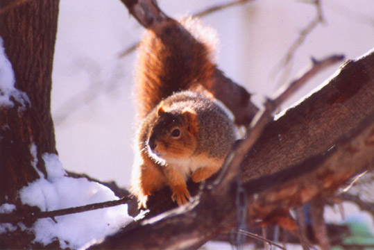 squirrel1.jpg